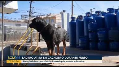 Ladrão atira em cachorro durante furto - Situação foi em uma distribuidora de gás; animal sobreviveu.