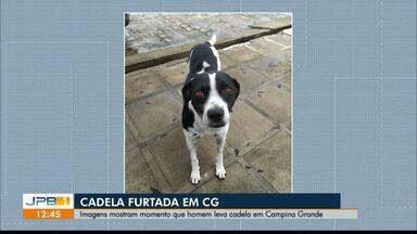 Cadela é furtada em Campina Grande - Imagens de câmeras de segurança mostram homem furtando o animal.
