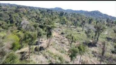 Força Estadual de Combate ao Desmatamento encerra operação 'Amazônia Viva' - Força Estadual de Combate ao Desmatamento encerra operação 'Amazônia Viva'