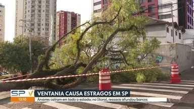 Vendaval causa transtornos em São Paulo - Bombeiros receberam mais de 50 chamados devido a queda de árvores. Houve ainda falta de energia em alguns trechos da cidade.