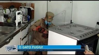 Gato é resgatado após ficar preso dentro de fogão ao fugir de cachorro; vídeo - Bombeiros tiveram que desmontar o aparelho.