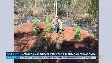 Incêndio revela plantação de maconha em Maringá - Bombeiros descobriram as plantas enquanto combatiam o fogo.