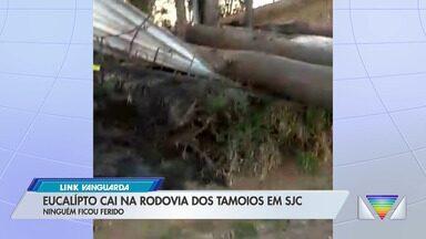 Árvore cai na Rodovia dos Tamoios em São José - Telespectador enviou imagens à Rede Vanguarda.