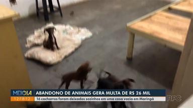 Abandono de animais gera multa de R$ 26 mil - Dezesseis cachorros foram deixados sozinhos em uma casa vazia, em Maringá