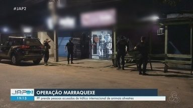 Operação Marraquexe: PF prende acusados de tráfico internacional de animais silvestres - Operação Marraquexe: PF prende acusados de tráfico internacional de animais silvestres