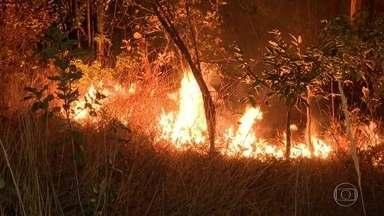 Incêndio criminoso destrói importante área da Floresta Nacional de Brasília - Fogo teria começado por causa de uma fogueira feita por três adolescentes, que estão sendo procurados pela polícia.
