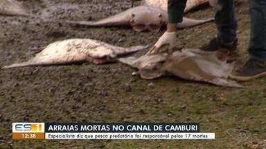 Arraias aparecem mortas em Vitória - Assista a seguir.