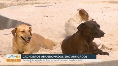 Cães abandonados ganham lar em área de hospital de Manaus - Espaço foi montado para abrigar animais em área do pronto-socorro Delphina Aziz.