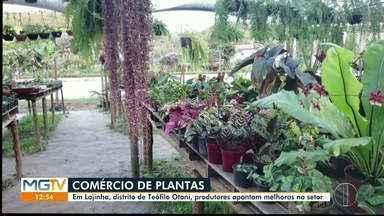 Produtores de plantas relatam melhora no mercado, em Teófilo Otoni - Vendas voltam a subir após queda no início da pandemia.