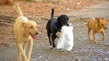 Cachorro chama atenção em Ilha Solteira ao levar pão para a dona - Cachorro chama atenção em Ilha Solteira ao levar pão para a dona da padaria até a casa dela.