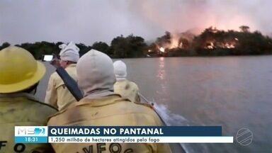 1,250 milhão de hectares já foram atingidos pelo fogo no Pantanal - 1,250 milhão de hectares já foram atingidos pelo fogo no Pantanal