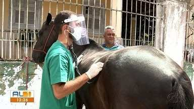 Ufal realiza ação de acolhimento de animais de grande porte no bairro do Pinheiro - Ação tem atendimento veterinário gratuito.