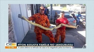 Moradores do bairro Jangurussu são surpreendidos por uma cobra - Saiba mais no g1.com.br/ce