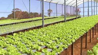 Agricultores de Mogi das Cruzes se unem para vender hortaliças - A região de Mogi produz 30% das hortaliças cultivadas no Estado. Isso representa 25 mil toneladas por dia. Com o fechamento de restaurantes, centrais de abastecimento e feiras, as vendas despencaram. Mas os agricultores se uniram e criaram um projeto que une as duas pontas: o produtor que precisa vender as hortaliças e as famílias carentes.
