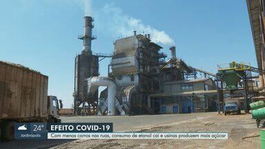 Consumo de etanol cai, mas preço volta a subir na região de Ribeirão Preto - Usinas aproveitaram alta do dólar para privilegiar a produção de açúcar ao invés do combustível.