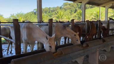 Pesquisadores brasileiros criam soro com anticorpos de cavalos contra a Covid - Medicamento é até 50 vezes mais potente. Os cientistas vão dar entrada nesta quinta (13) na patente da descoberta.