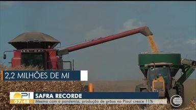 Mesmo durante a pandemia, Piauí tem safra recorde de grãos - Mesmo durante a pandemia, Piauí tem safra recorde de grãos