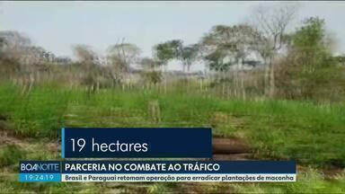 Brasil e Paraguai retomam operação para erradicar plantações de maconha - Na fronteira, forças de segurança apreenderam quase sete toneladas da droga só no fim de semana.