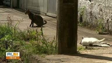 Quatro gatos são envenenados com chumbinho no bairro Santos Dumont, em Maceió - Ação criminosa aconteceu no início desta semana.