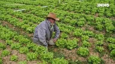 Greve dos caminhoneiros afeta mercado de hortaliças - Na Região Serrana do Rio, Fernando Gabeira, acompanhou o que aconteceu com a produção de verduras e legumes e investiga como os produtores lidaram com estoques estragando no pé, prejuízos, desabastecimento e a especulação que valorizou exemplares mais frescos.