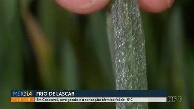 Em Cascavel, teve geada e a sensação térmica foi de -5°C - Imagens lindas foram registradas no campo.