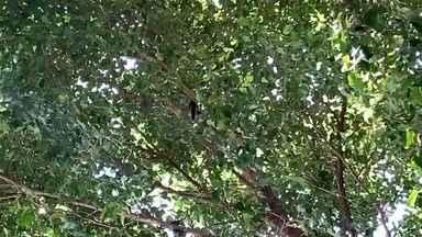 Saguis chamam atenção ao 'passear' pela fiação de postes de avenida movimentada em Bauru - Dois saguis apareceram passando pela fiação da rede elétrica e por algumas árvores, na altura do cruzamento da Avenida Duque de Caxias com a rua 29 de outubro, no Bairro Higienópolis. É uma região bastante movimentada, inclusive, com várias agências bancárias e um grande fluxo de veículos o dia todo. Por isso, chama a atenção esses animais aparecerem por lá, provavelmente em busca de comida.