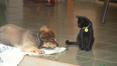 Animais ganham microchip em Votuporanga para controlar população de cães e gatos - Em Votuporanga (SP) começou a implantação de microchips em animais que passam pelo centro de proteção a vida animal. A medida faz parte de um programa de controle da população de cães e gatos na cidade.