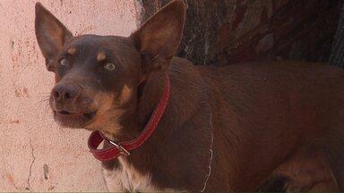 Cachorro de rua ajuda homem a recuperar carteira com 4 mil reais - Ele levou a carteira até uma loja em frente ao local onde o homem trabalha e entregou na mão da funcionária