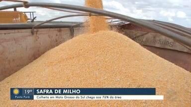 Colheita em Mato Grosso do Sul chega aos 76% da área - Colheita em Mato Grosso do Sul chega aos 76% da área