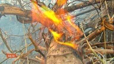 Número de focos de calor em Mato Grosso está quase 30% maior que 2019 - Em Mato Grosso, o número de focos de calor, este ano, está quase trinta por cento maior do que no ano passado. As queimadas vêm destruindo biomas.