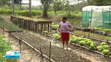 Veja os destaques do Mirante Rural - A apresentadora Jéssica Melo tem mais informações.