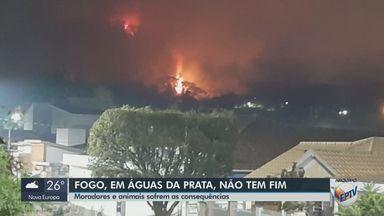 Moradores e animais sofrem as consequências dos incêndios em Águas da Prata - Prefeitura decretou situação de emergência ambiental.