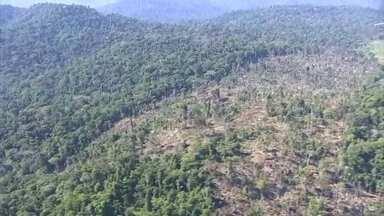 Desmatamento na Amazônia em agosto foi o maior para o mês nos últimos dez anos - De acordo com dados do Instituto Imazon, a taxa de desmatamento da Amazônia foi 68% maior que no mesmo período de 2019.