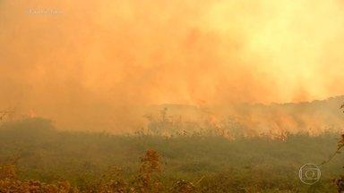 No Pantanal, imagens mostram caminho do fogo e PF suspeita de ação criminosa em fazendas - Fantástico teve acesso aos detalhes do inquérito que investiga a origem de focos de queimadas no Pantanal. Imagens de satélite mostraram o caminho do fogo e a Polícia Federal suspeita da ação criminosa de criadores de gado da região.