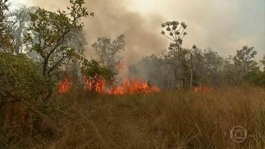 Queimadas em MS colocam em risco a vida de comunidades ribeirinhas - A mudança no tempo que provocou chuva em parte do Pantanal melhorou a umidade do ar, mas também trouxe ventos fortes, que ajudam a propagar as chamas.