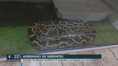 Polícia Ambiental apreende 19 serpentes e um lagarto exótico em casa de Mococa - Proprietário do local foi multado em R$ 8,4 mil. Animais foram levados para o Instituto Butantã.