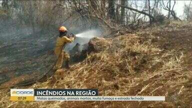 Domingo é marcado por incêndios na região de Ribeirão Preto - Houve matas queimadas, animais mortos e muita fumaça, além de interdição em rodovia.