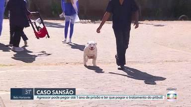 Ministério Público pede denúncia contra agressor de Sansão - Homem pode pegar 1 ano de prisão por maus-tratos e por mutilar animal. Ex-dono de Sanção também recebe punição.