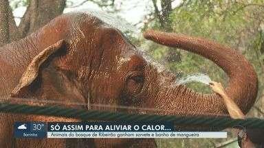 Animais do zoo de Ribeirão Preto, SP, ganham sorvete e banho de mangueira - Para aliviar o calor de 39°C, só água e frutas geladas.