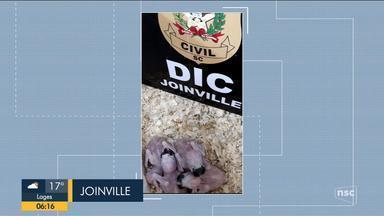 Animais exóticos são resgatados em Joinville; giro de notícias - Animais exóticos são resgatados em Joinville; giro de notícias