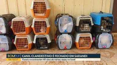 Canil clandestino é fechado em Sarandi - Fiscais encontraram 40 cães de várias raças no local