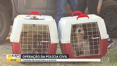 'Lei Sansão': primeira operação por maus-tratos a animais é realizada em Belo Horizonte - Ação da Polícia Civil foi feita no bairro Heliópolis, na Região Norte da capital mineira. Quatro cachorros e sete gatos foram resgatados.