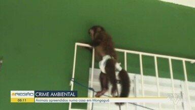 Animais selvagens são resgatados em uma residência em Mongaguá - Proprietário do imóvel responderá por crime ambiental.