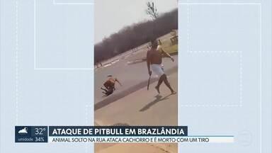 Pitbull solto em rua, sem focinheira, ataca outro cão e é morto por um PM em Brazlândia - O caso foi registrado na delegacia como omissão de cautela na guarda do animal. A dona do pitbull foi liberada após assinar um termo se comprometendo a comparecer na justiça.