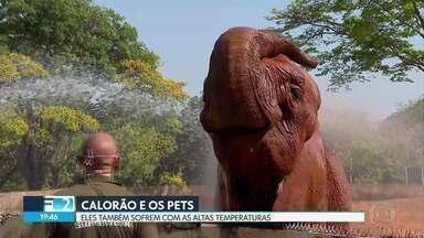Pets também sofrem com a onda de calor no DF - Especialistas e donos de animais dão dicas de como amenizar as altas temperaturas e manter os animais hidratados.