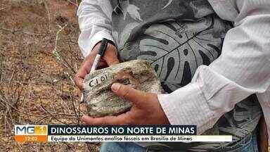Equipe da Unimontes analisa fósseis de dinossauros em Brasília de Minas - Pesquisadores estão fazendo escavações para encontrar fósseis de dinossauros.