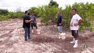 A tradição de uma família cearense em fazer cajuína - Daniel Viana conhece rotina e o carinho da família que prepara a Cajuína do Pial