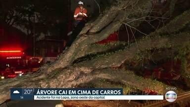 Árvore de grande porte cai em cima de 3 carros na lapa - Moradores da rua Catão dizem que pedem para prefeitura cortar a árvore desde 2011