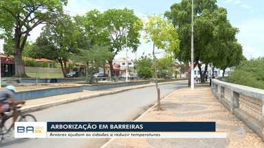 Eleições 2020: veja propostas dos candidatos de Barreiras para arborização da cidade - Confira.