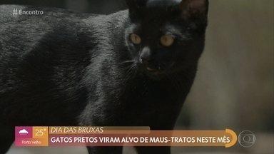 Preconceito contra gatos pretos vem desde a idade média - Veterinária faz alerta para maus tratos a gatos pretos nesta época do ano